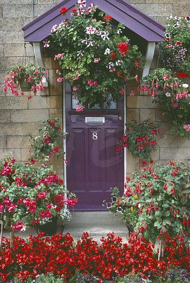 Image Colourful Hanging Baskets On Either Side Of Purple Front Door